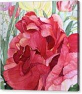 Double Tulip Acrylic Print