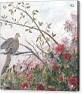 Dove And Roses Acrylic Print