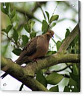 Dove Bar Acrylic Print