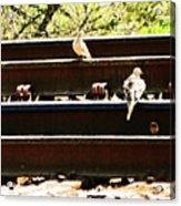 Doves On The Tracks Acrylic Print