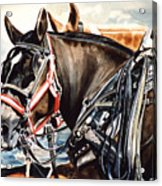 Draft Mules Acrylic Print by Nadi Spencer