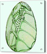 Dragon Egg Acrylic Print
