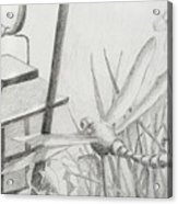 Dragon Fly And Lantern Acrylic Print