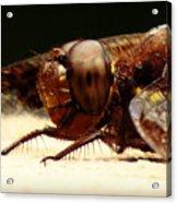 Dragon Fly Head Acrylic Print