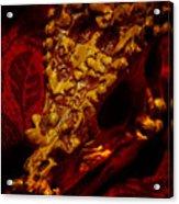 Dragon Skull Acrylic Print