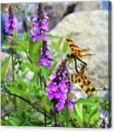 Dragonflies In Summer Acrylic Print