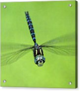 Dragonfly #1 Acrylic Print