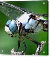 Dragonfly 16 Acrylic Print