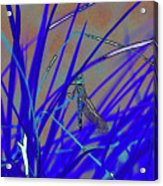 Dragonfly 7 Acrylic Print