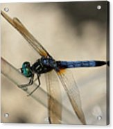 Dragonfly Abstract Acrylic Print
