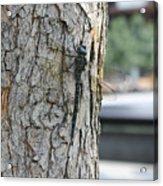 Dragonfly At Ground Zero Acrylic Print