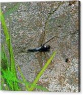 Dragonfly A Acrylic Print
