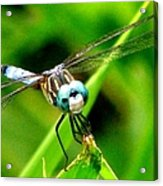 Dragonfly Close Up 2 Acrylic Print
