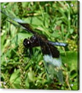 Dragonfly Close Up Acrylic Print