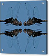 Dragonfly Composite Color Acrylic Print