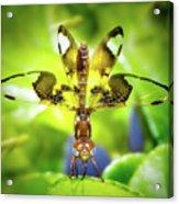 Dragonfly Design Acrylic Print