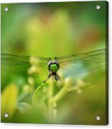 Dragonfly Dream In Green Acrylic Print