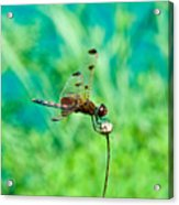 Dragonfly Hanging On Acrylic Print