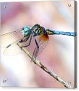 Dragonfly In Balance Acrylic Print