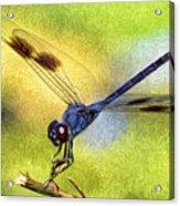 Dragonfly In Blue Acrylic Print