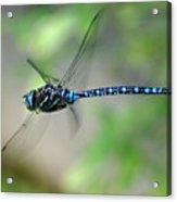 Dragonfly In Flight 2 Acrylic Print