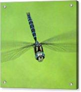 Dragonfly In Flight Acrylic Print