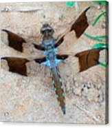Dragonfly In The Sand Acrylic Print