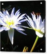 Dragonfly Lily Acrylic Print