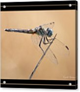 Dragonfly Needlepoint With Border Acrylic Print