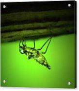 Dragonfly Nymph Acrylic Print