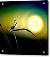 Dragonfly Of Color Acrylic Print