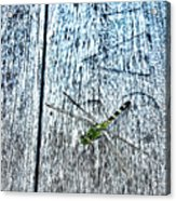 Dragonfly On A Bench Acrylic Print