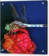 Dragonfly On A Pitcher Plant 009 Acrylic Print