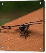Dragonfly On A Porch Railing Acrylic Print