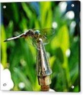 Dragonfly On Flag Post Acrylic Print