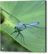 Dragonfly On Lily Acrylic Print