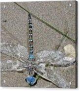 Dragonfly On The Beach Acrylic Print