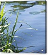 Dragonfly On The Lake Acrylic Print