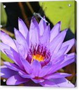 Dragonfly On Water Lily Acrylic Print