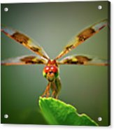 Dragonfly Pitstop Acrylic Print