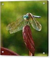 Dragonfly Resting II Acrylic Print