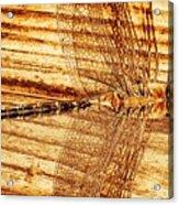 Dragonfly Sepia Acrylic Print