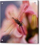 Dragonfly Serenity Acrylic Print