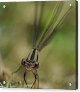 Dragonfly Up Close Acrylic Print