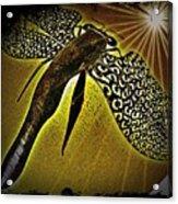 Dragonfly V Acrylic Print