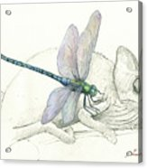 Dragonfly With Chameleon Acrylic Print