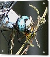 Dragonfly With Yellowjacket 3 Acrylic Print