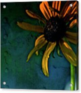 Drama Queen Acrylic Print by Bonnie Bruno