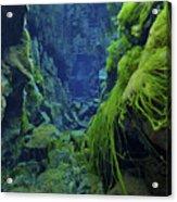 Dramatic Fluorescent Green Algae Acrylic Print by Mathieu Meur