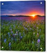 Dramatic Spring Sunrise At Camas Prairie Idaho Usa Acrylic Print